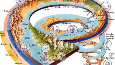 Foto de Desenvolvimento e evolução da vida na Terra