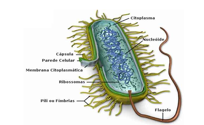 Estrutura e função das células bacterianas